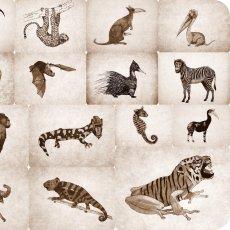 15 animots Walyse, dessins de Daniel Hébert