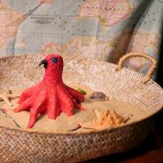 Le perroquetoile de mer découvert par Euphrasie Bougainvillier